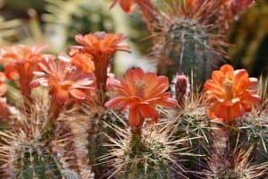 fleurs et épines