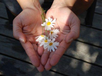 fleurs offertes en cadeau dans des mains ouvertes en forme de coeur